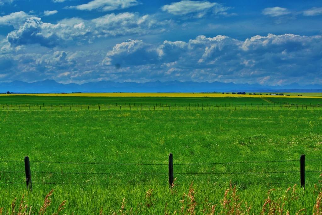 Tara Pettifor Alberta Landscape