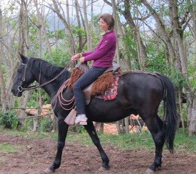 horseangele