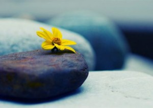 Flower Grows on Stone