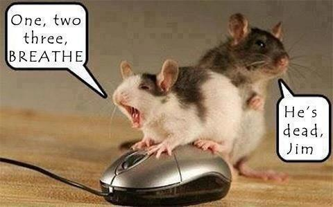 Mouse CPR